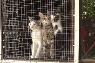 Cruzime înfiorătoare la Brăila. Doi pui de pisică, uciși în chinuri și aruncați pe linia de înaltă tensiune