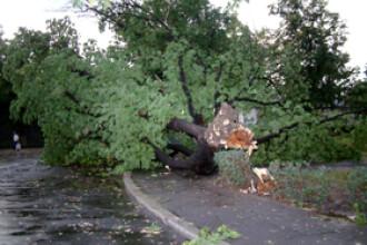 Din cauza furtunii mai multi copaci s-au rupt si au cazut peste masini