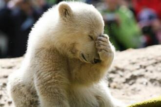 O criza de epilepsie i-a provocat moartea lui Knut, a dezvaluit autopsia