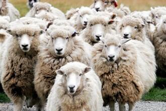Dezastru! Milioane de animale moarte de frig in Mongolia si Kazahstan