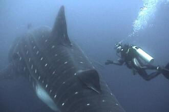 Operatiune de salvare neobisnuita in Mexic! Balena a scapat cu bine