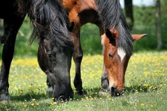 Final de an fericit pentru doi cai abandonati!