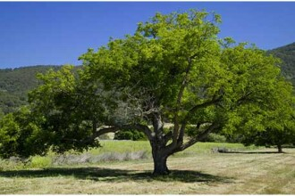 Ti-ai petrece vacanta in copac? E oferta unei pensiuni din Spania!