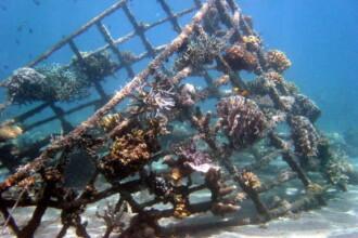 Nava scufundata intentionat pentru a fi transformata in recif artificial