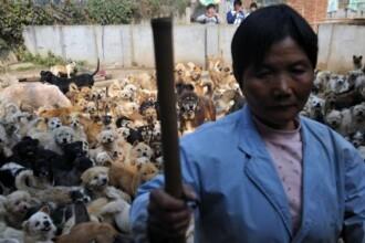 Suflet prea mare? A adoptat 1.500 de caini si 200 de pisici fara stapan