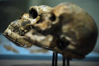 Uimitor!S-au descoperit ramasitele unui homo sapiens de acum 400.000 de ani