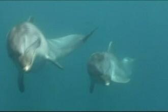 Delfinii soldati din Crimeea au participat la un exercitiu al Flotei Ruse de la Marea Neagra