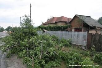 Trafic rutier ingreunat din cauza copacilor doborati de vant, pe drumuri nationale din doua judete