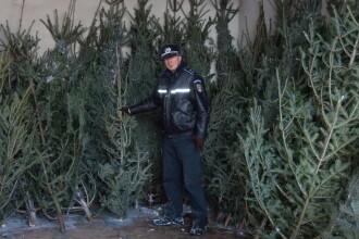 2 tone de cetina si peste 200 de brazi au fost confiscati de politistii clujeni
