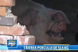 Cautam un porc bine crescut sa-l facem vedeta de Ignat. Trimite-ne poza si il vezi la TV
