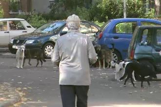 Maidanezii, o problema de siguranta nationala. SRI-ul a numarat peste 62.000 de caini in Capitala