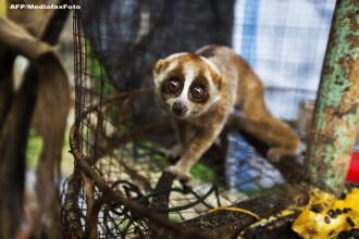 Cea mai rea gradina zoologica din lume este in Indonezia. Peste 50 de animale au murit in 3 luni