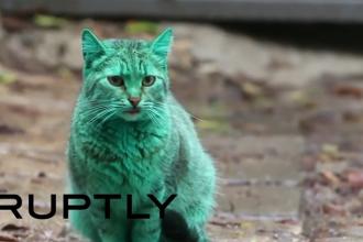 Pisica cu blana verde, pe strazile din Varna. Localnicii i-au descoperit misterul. VIDEO