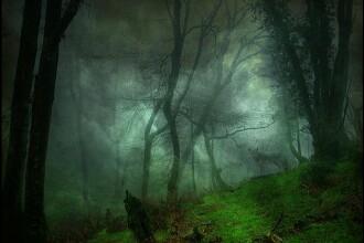 Padurea Baciu din Cluj este prezenta in TOP 5 cele mai inspaimantatoare locuri din lume. Autorii il mentioneaza pe Vlad Tepes