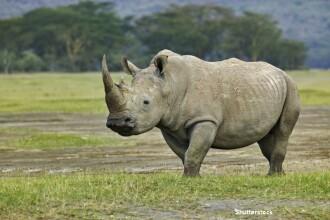 In lume au mai ramas doar cinci rinoceri albi nordici