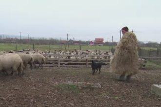 Parlamentul a stabilit la cati caini au dreptul ciobanii. Legea