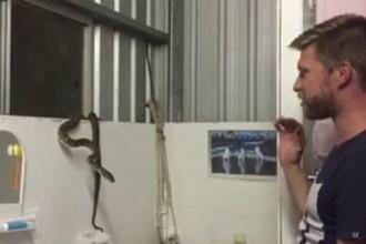 Confruntarea dintre un barbat si un sarpe infometat, in casa unei familii speriate. Cum s-a terminat totul. VIDEO