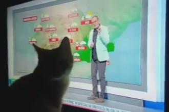 Cum reactioneaza o pisica atunci cand Busu anunta scaderile dramatice din termometre. Imaginile care te vor face sa zambesti