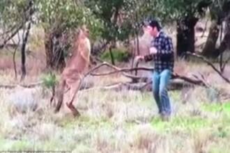 Gestul controversat facut de un australian pentru a-si salva cainele din bratele unui cangur. VIDEO