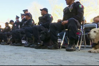 Noua caini politisti din Mexic au fost adoptati de catre partenerii lor. La ce misiuni periculoase participau