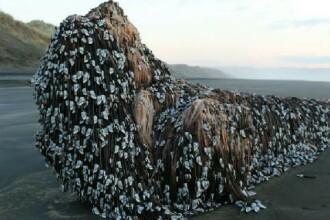 Aparitie stranie pe o plaja din Noua Zeelanda. O formatiunea stancoasa a aparut la mal