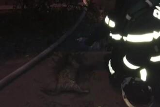 Trei pisici si un catel, salvati dintr-un incendiu de pompierii din Timisoara. Salvatorii au resuscitat una dintre feline