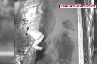 Un barbat din Sibiu a facut rost de brad fara sa mai treaca pe la magazin: a fost filmat cum il taie din fata unei case
