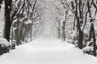 Cum va fi vremea de Crăciun. Ninsori și intensificări ale vântului în perioada următoare