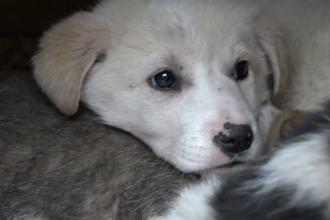 """""""Adoptă un câine de Moș Nicolae"""", îndemnul unui adăpost din Târgu Mureș"""