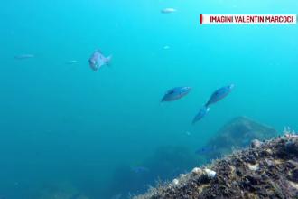 Zeci de specii de pești au revenit în Marea Neagră după ani de absență. Biologii spun că s-a redus poluarea