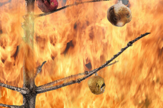 Casă din SUA, la un pas de incendiu din cauza unei instalații de Crăciun. VIDEO