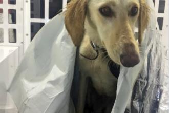 Câine, abandonat pe marginea unui drum înghețat, salvat de polițiștii britanici