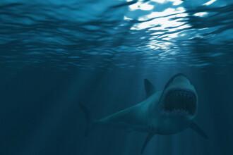 O femeie, aflată în luna de miere, a fost mușcată de un rechin. VIDEO