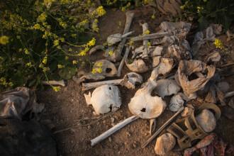 Gropi comune cu victimele ISIS, găsite în Irak. Copii ucişi pentru că