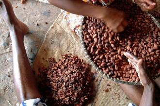 Efectele amare ale industriei producătoare de ciocolată: 2 milioane de copii, exploatați pe plantațiile de cacao