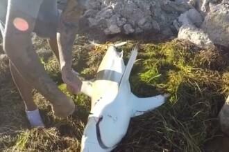 Pescar, atacat de un rechin pe care voia să îl salveze. VIDEO