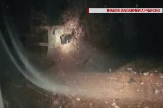 Străzile din Buşteni, invadate de urşi după lăsarea întunericului