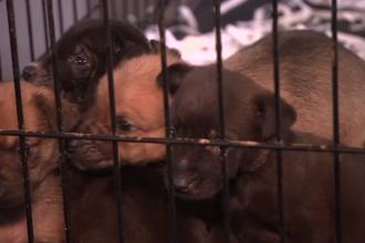 Autoritățile din București au început o campanie de sterilizare gratuită pentru câinii cu stăpân
