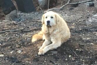 Povestea unui câine care și-a așteptat stăpânii timp de o lună la locuința distrusă de flăcări