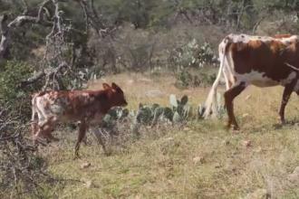 Produsele de origine animală afectează planeta. Ce au descoperit cercetătorii