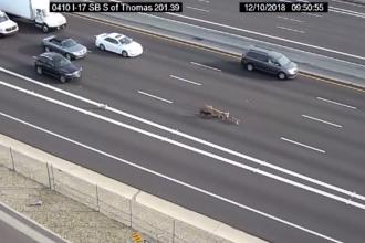 Traficul pe o şosea, dat peste cap de o haită de câini. Cum au fost prinşi