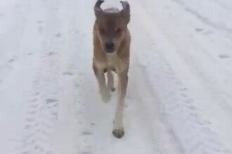 Jandarmii au salvat 6 cățeluși îngropați în zăpadă. Mama puilor le-a arătat unde erau