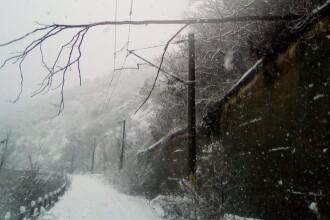 Trenuri întârziate, 17 decembrie. Două linii blocate de copacii căzuţi