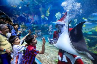Scafandru costumat în Moș Crăciun în Parcul Oceanic din Manila