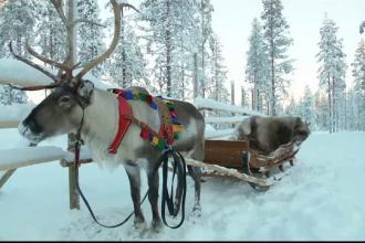 300 de români vor pleca zilele acestea spre Laponia. Preţul unei excursii de vis