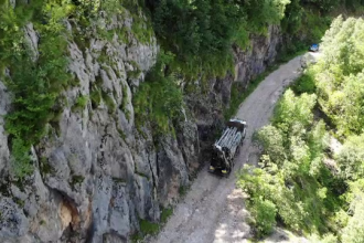 Motivul pentru care fermierii români fug de banii dați de stat pentru a planta copaci