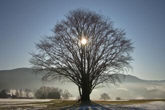 Solstiţiul de iarnă 2018. Când va fi cea mai lungă noapte din an