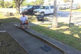 Piton uriaș de peste 5 metri, prins de un vânător de reptile. Cât cântărește monstrul