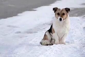 Un câine și-a așteptat 6 luni în frig stăpânul care l-a părăsit. Indiciul care îl făcea să alerge după mașini