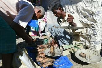 Locul unde carnea de șobolan este mai populară decât puiul sau porcul